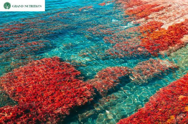 Nguyên liệu tự nhiên có trong nước tăng chiều cao GTall